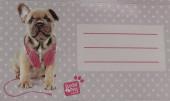 16 Etiquetas Autocolantes Studio Pets