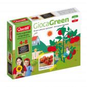 Gioca Green Plantar Tomates